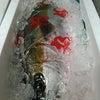 今日の魚の仕入れの画像