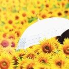 日傘の選び方..._〆(゜▽゜*)の記事より