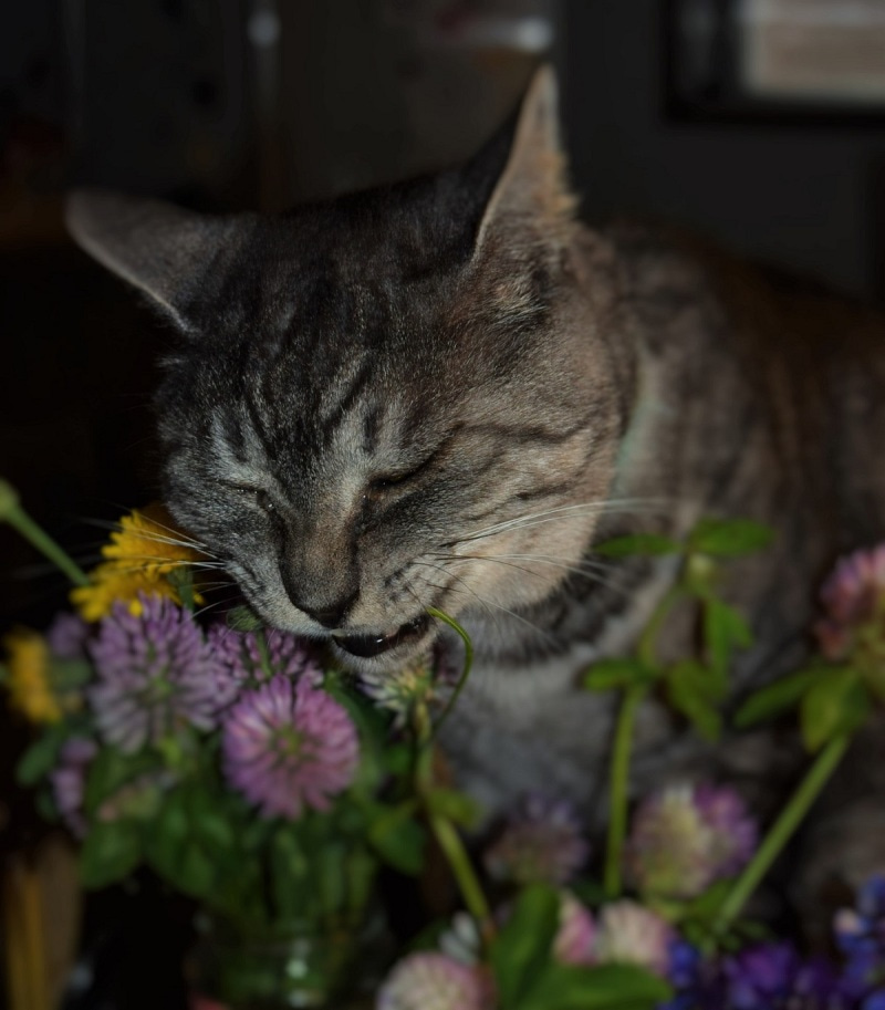 花を齧るキュウちゃん