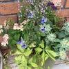 夏の花を 寄せ植え アポアの画像