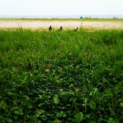 自分の芝生と他人の芝生は違っていて当たり前の記事に添付されている画像