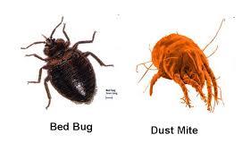 除菌スプレーは猛毒?「カビ・ダニ」を急速で死滅させる「天然スプレー」とは?