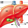 沈黙の臓器と呼ばれる由縁の画像
