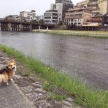 京都きてます♡