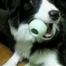 愛犬、カイさん♪
