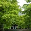 真如堂の輝く緑と紫陽…