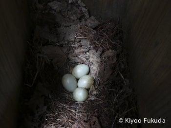 キビタキの巣箱