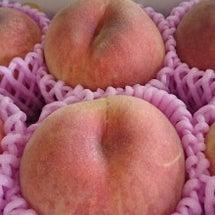 桃狩りのおしらせ