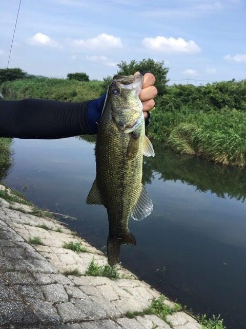 7月18日新川・桑納川午前釣行 | ...