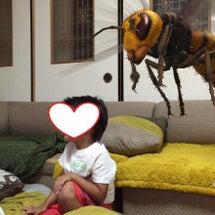 巨大なハチに襲われる…