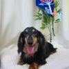 元気いっぱいのシニア犬、イキイキ犬賞に応募するぞ~~(^^♪の画像