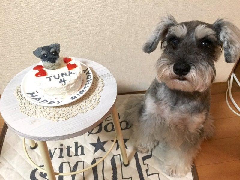 Resultado de imagen para 犬 Schnauzer  ケーキを食べる