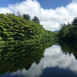 今朝の雲場池