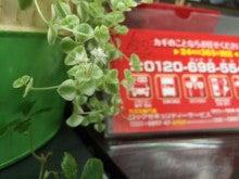 ロックセキュリティーサービス 多肉植物-1