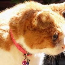 高齢の猫は美しいとい…