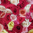 flower pre…