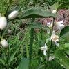 ゆずの花の画像