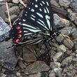 蝶々見れました