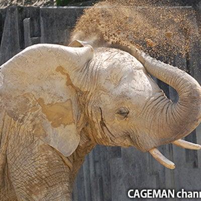 ゾウさんの耳の「穴」を直視したこと、ありますか?意外なところにあった!?東山動植の記事に添付されている画像