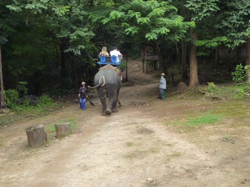 象に乗って川を渡って山登り!象の背中は広い☆29