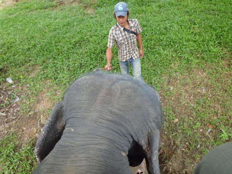 象に乗って川を渡って山登り!象の背中は広い☆25