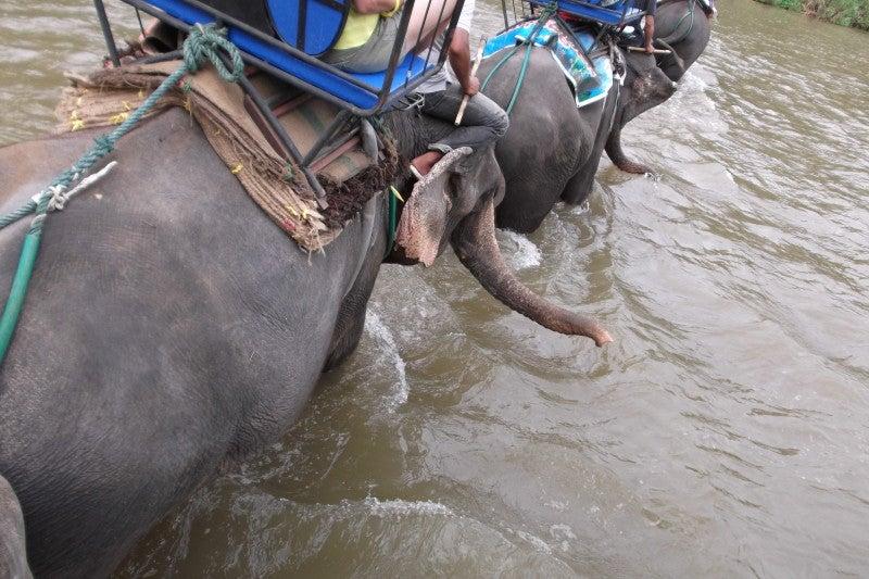象に乗って川を渡って山登り!象の背中は広い☆7
