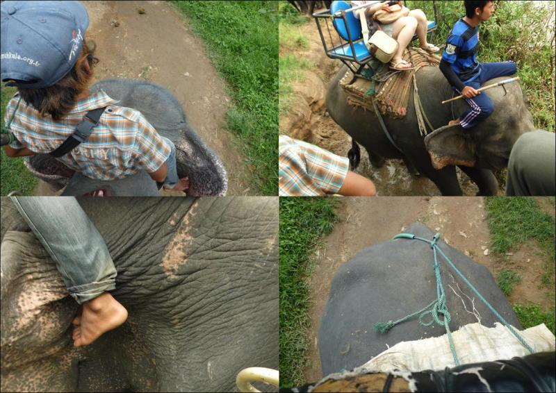 象に乗って川を渡って山登り!象の背中は広い☆11