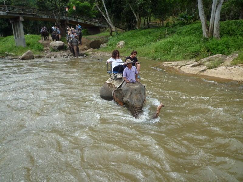 象に乗って川を渡って山登り!象の背中は広い☆14
