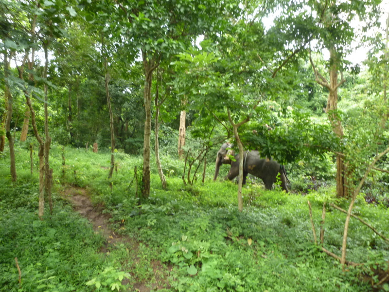 象に乗って川を渡って山登り!象の背中は広い☆33