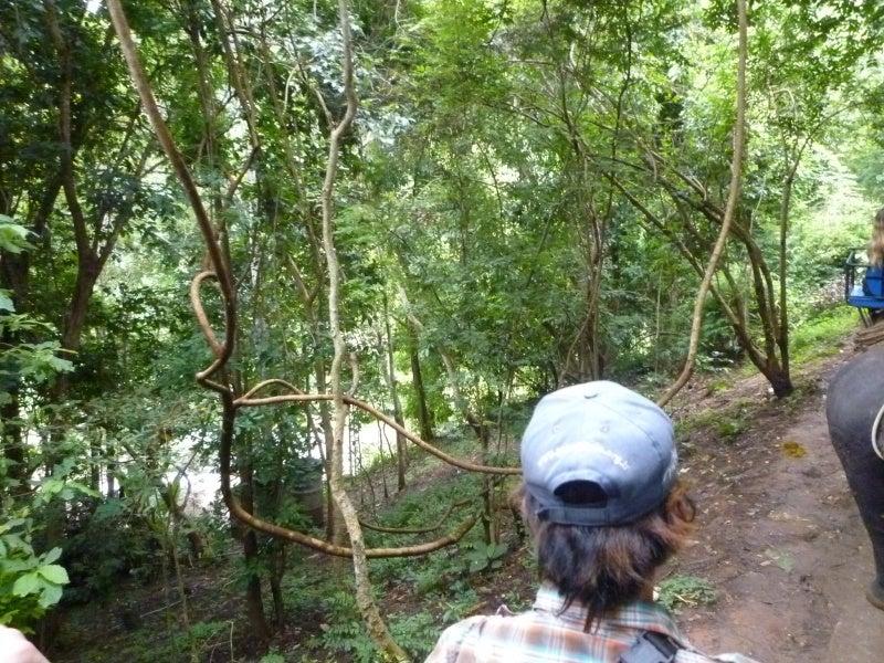 象に乗って川を渡って山登り!象の背中は広い☆31