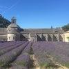 セナンク修道院☆南仏の画像