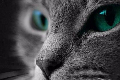 cat-1535160__340