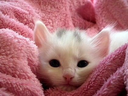 kitten-227009_960_72