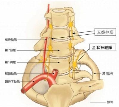 人間の健康に貢献する施術家を目指す理学療法士のブログ横も向けないほど痛い…首の痛みの原因と予防法コメント
