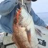 激熱 真夏の真鯛の画像
