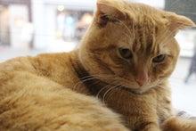 猫カフェ RonRon 新ブログ-ぺぺ