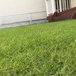 芝生もおめかし