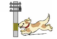 も ば 犬 に当たる 歩け 棒