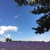 もう1つの紫☆南仏の画像