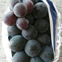 初めての葡萄の記事に添付されている画像