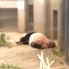 上野動物園へ行ってきたよの記事より