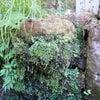 英彦山・高住神社で汲む天然水が大ピンチ!の画像