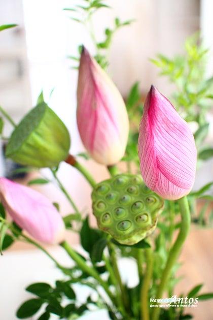 蓮の花と実 中島磨理