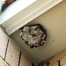 ハチの巣 大きかった…