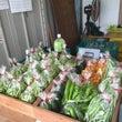 枝豆(野菜)販売に関…