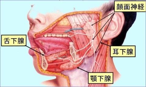 急性化膿性耳下腺炎 | きまぐれ...