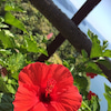『流しソーメン』で夏を満喫!の画像