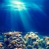 海の恵 タラソ.。゚+.゚^o^の画像