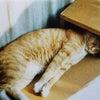 うちの『バカ猫』の画像