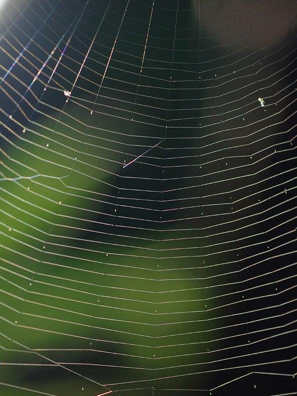 160825sクモの巣 点々